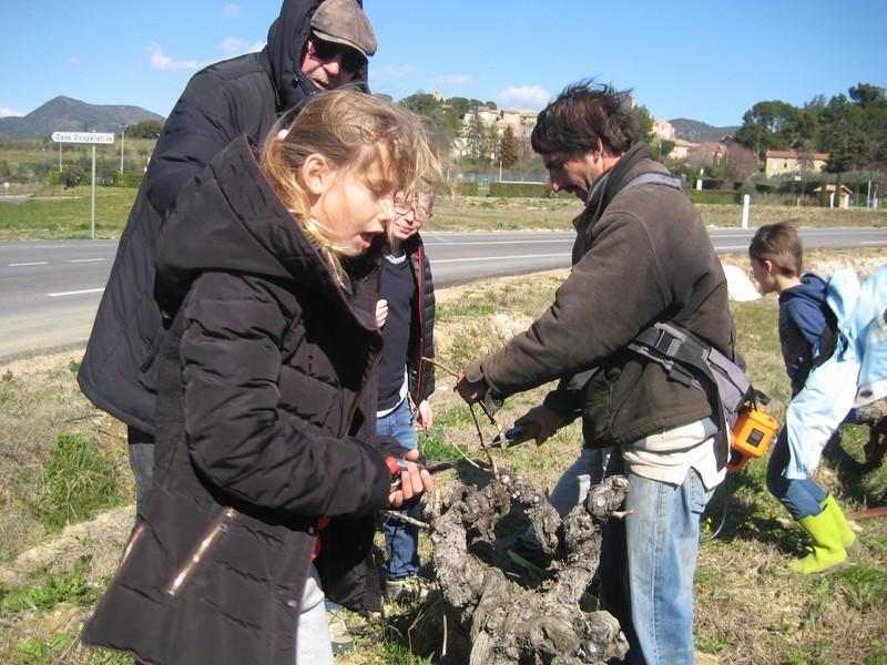 Quand les enfants taillent leur vigne la gazette locale - Quand tailler une vigne ...